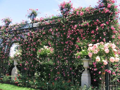 Top-des-jardins-autour-de-Paris-Roseraie-Val-de-Marne
